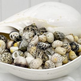 Neritas Mixed colour shells