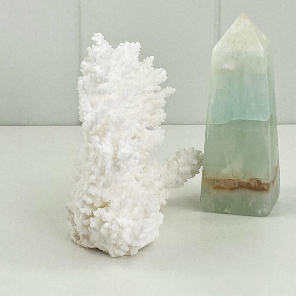 Acropora Coral Specimen